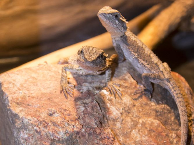 Methods to clean wood for bearded dragons, rocks, branches and sticks