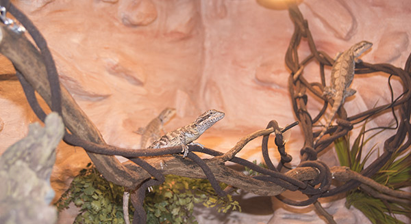 DIY rockwall background for reptile enclosure