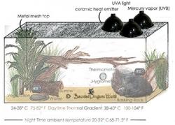 Bearded dragon habitat lighting setup with mercury vapor lights
