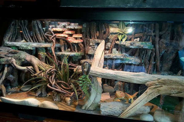 How to set up your bearded dragon cage