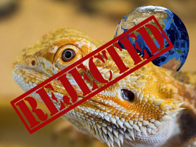 bearded dragons cannot be imported or exported Australia