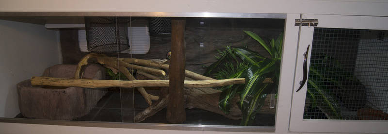 Bearded dragon house made from melamine.