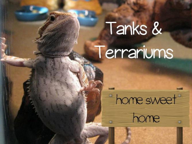 bearded dragon tank and terrarium