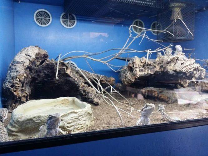 bearded dragon tank ventilation