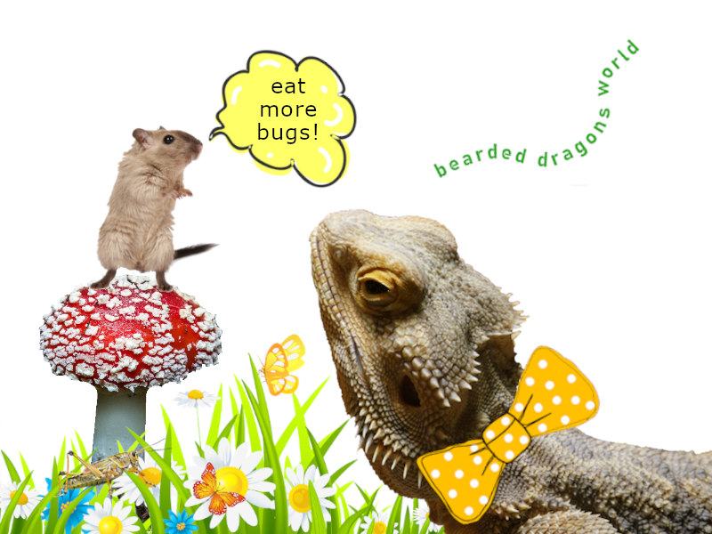 Bearded Dragons Eat Mice [& healthy options]