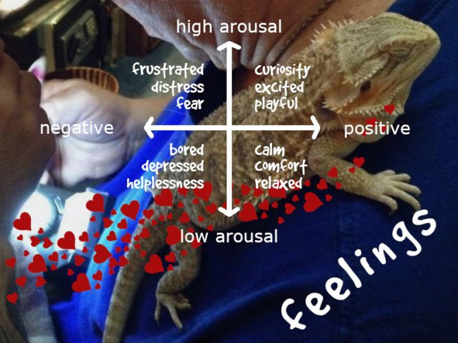 bearded dragons feel emotion