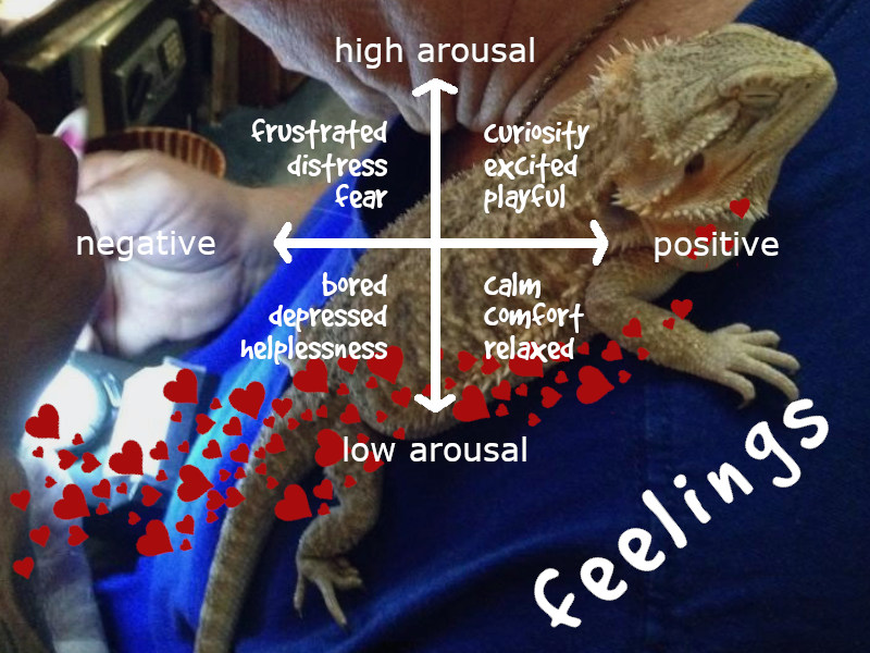 Do Bearded Dragons Feel? [sentience and science]