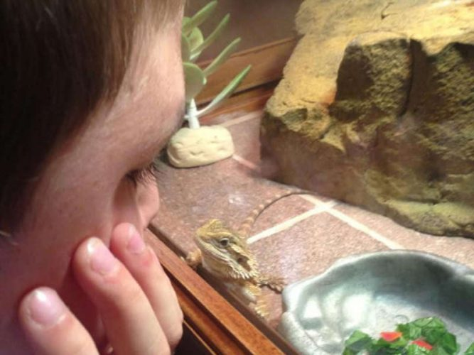 are bearded dragons safe for toddlers