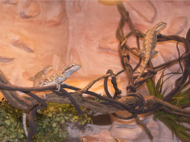 diy background for bearded dragon