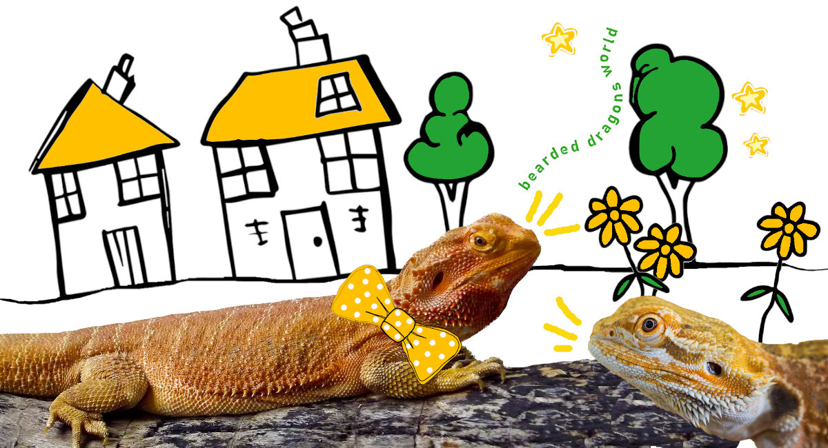 bearded dragons world home