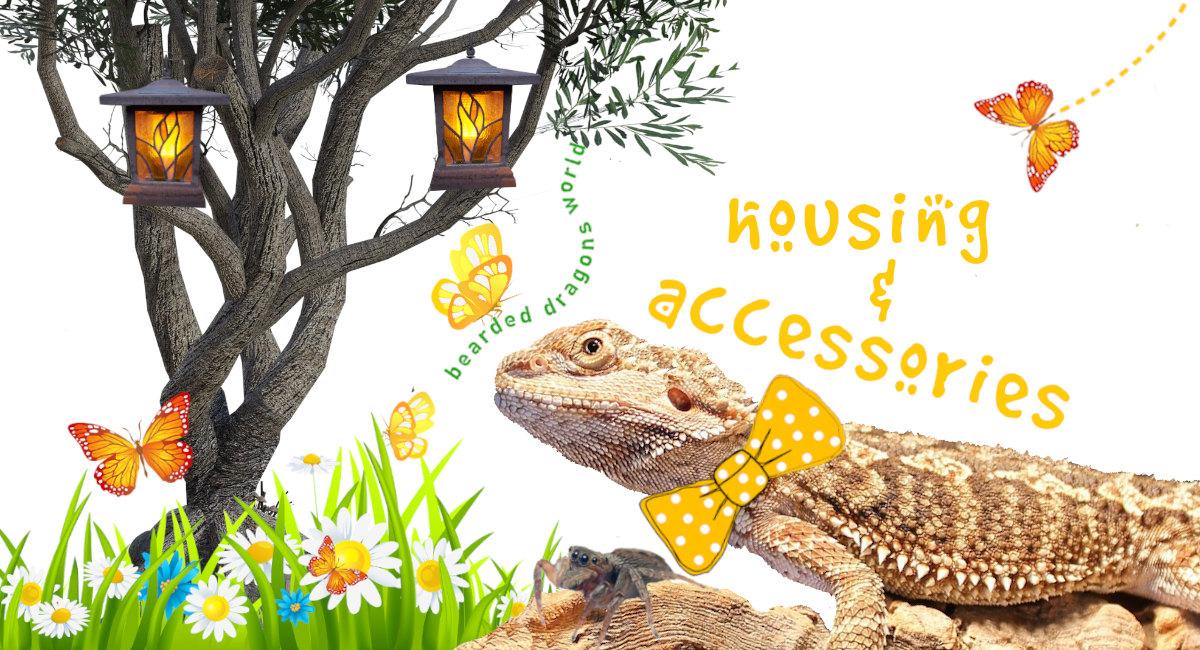 bearded dragon housing