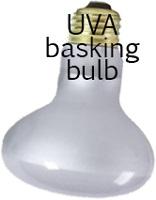 Frosted uva basking bulb for bearded dragon habitat