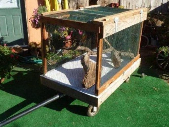 mobile outdoor housing for bearded dragon