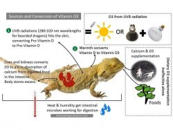 vitamin d3 sources bearded dragons